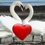 Terbukti Sudah: Cinta Romantis Seumur Hidup